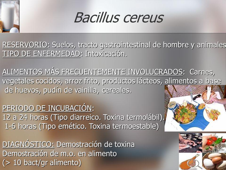 Bacillus cereus RESERVORIO: RESERVORIO: Suelos, tracto gastrointestinal de hombre y animales. TIPO DE ENFERMEDAD: ENFERMEDAD: Intoxicación. ALIMENTOS