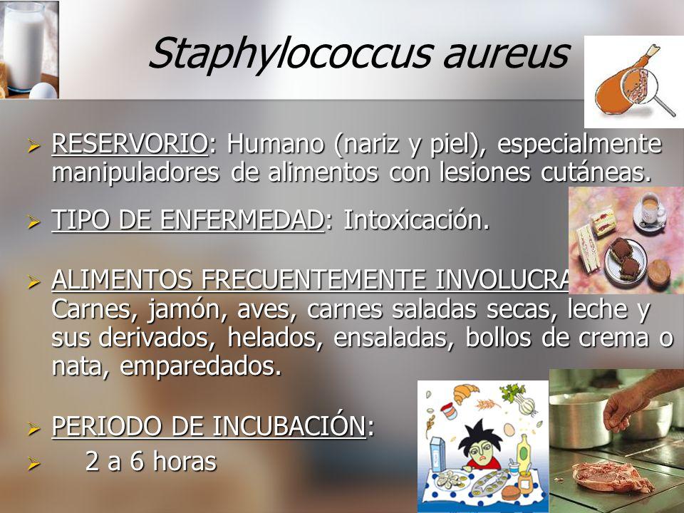 Staphylococcus aureus RESERVORIO: RESERVORIO: Humano (nariz y piel), especialmente manipuladores de alimentos con lesiones cutáneas. TIPO TIPO DE ENFE