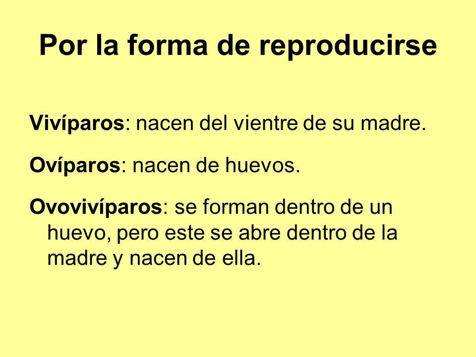Por la forma de reproducirse Vivíparos: nacen del vientre de su madre.