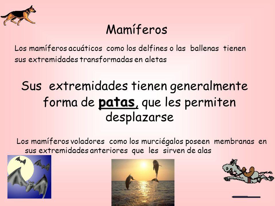 Los mamíferos voladores como los murciégalos poseen membranas en sus extremidades anteriores que les sirven de alas patas Sus extremidades tienen generalmente forma de patas, que les permiten desplazarse Los mamíferos acuáticos como los delfines o las ballenas tienen sus extremidades transformadas en aletas Mamíferos