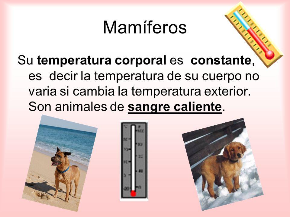 Su temperatura corporal es constante, es decir la temperatura de su cuerpo no varia si cambia la temperatura exterior.