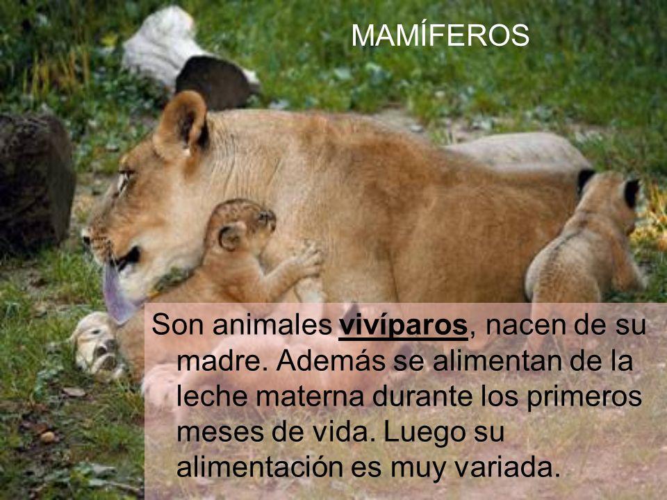 Son animales vivíparos, nacen de su madre.