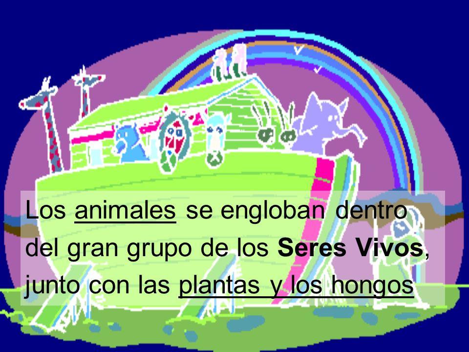 Los animales se engloban dentro del gran grupo de los Seres Vivos, junto con las plantas y los hongos
