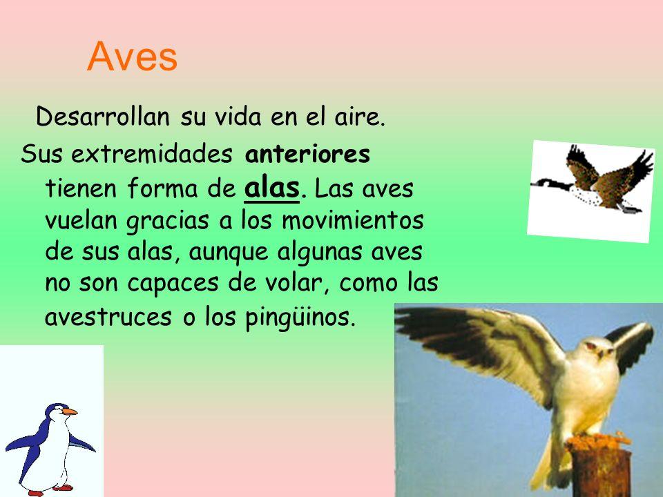 Aves Desarrollan su vida en el aire.Sus extremidades anteriores tienen forma de alas.