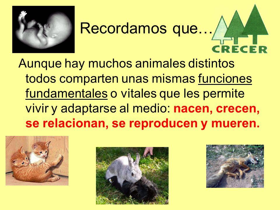 Recordamos que… Aunque hay muchos animales distintos todos comparten unas mismas funciones fundamentales o vitales que les permite vivir y adaptarse al medio: nacen, crecen, se relacionan, se reproducen y mueren.