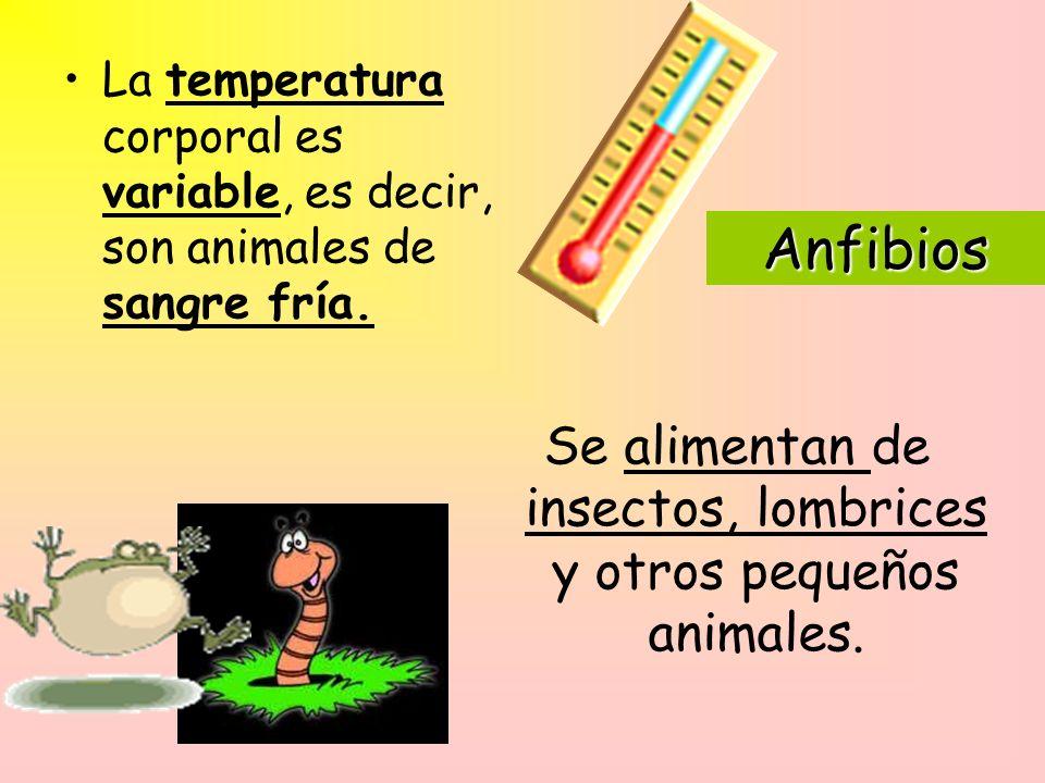 Anfibios La temperatura corporal es variable, es decir, son animales de sangre fría.