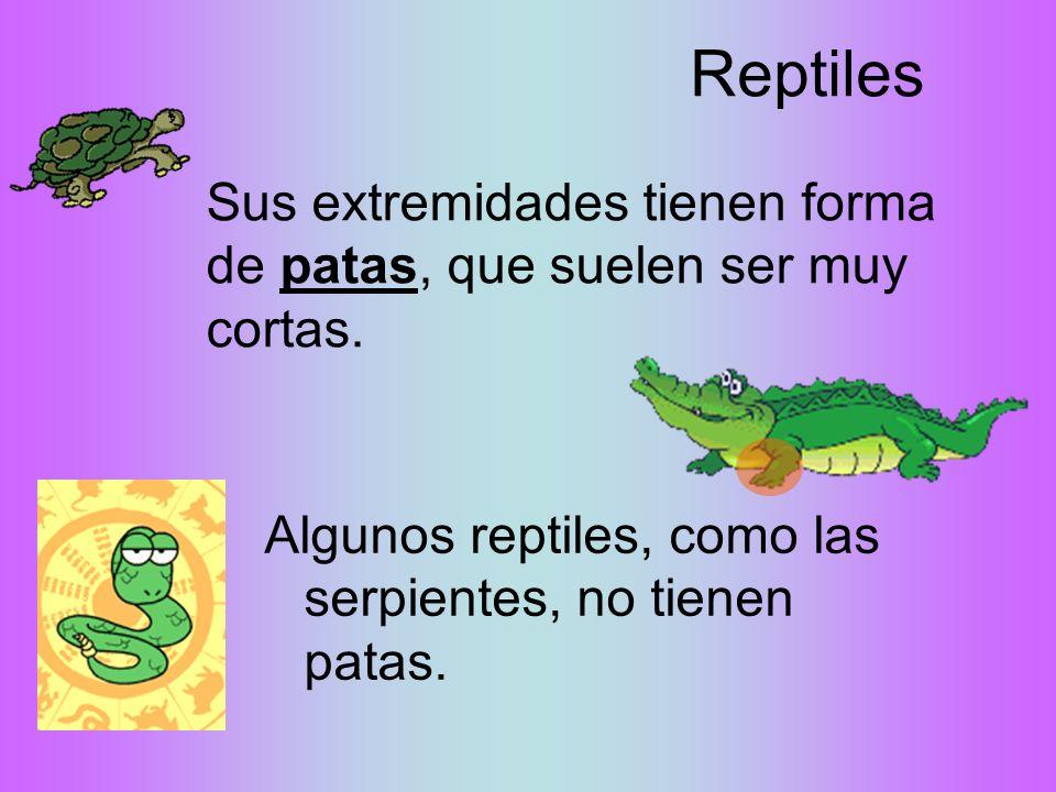 Reptiles Sus extremidades tienen forma de patas, que suelen ser muy cortas.
