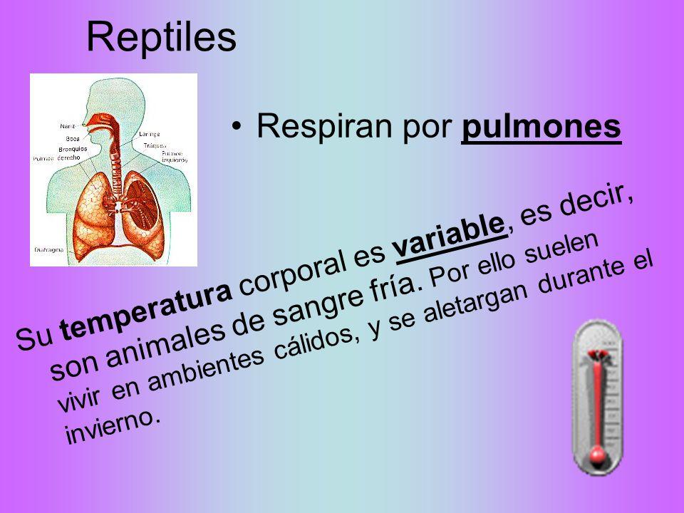 Reptiles Su temperatura corporal es variable, es decir, son animales de sangre fría.