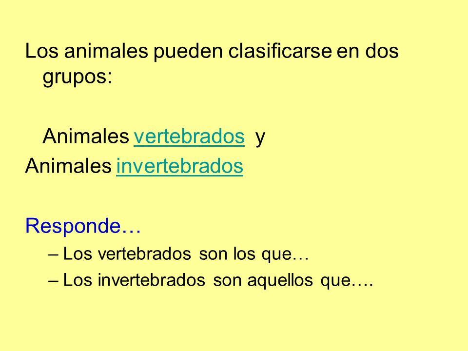 Los animales pueden clasificarse en dos grupos: Animales vertebrados yvertebrados Animales invertebradosinvertebrados Responde… –Los vertebrados son los que… –Los invertebrados son aquellos que….