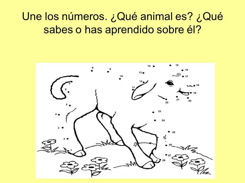 Une los números. ¿Qué animal es? ¿Qué sabes o has aprendido sobre él?