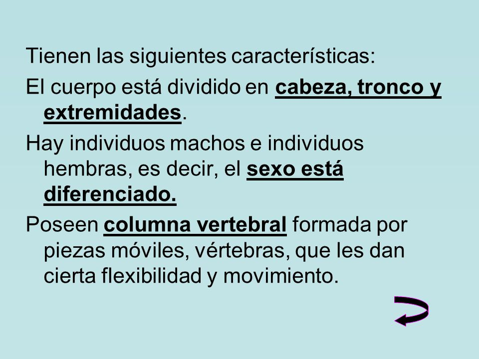 Tienen las siguientes características: El cuerpo está dividido en cabeza, tronco y extremidades.