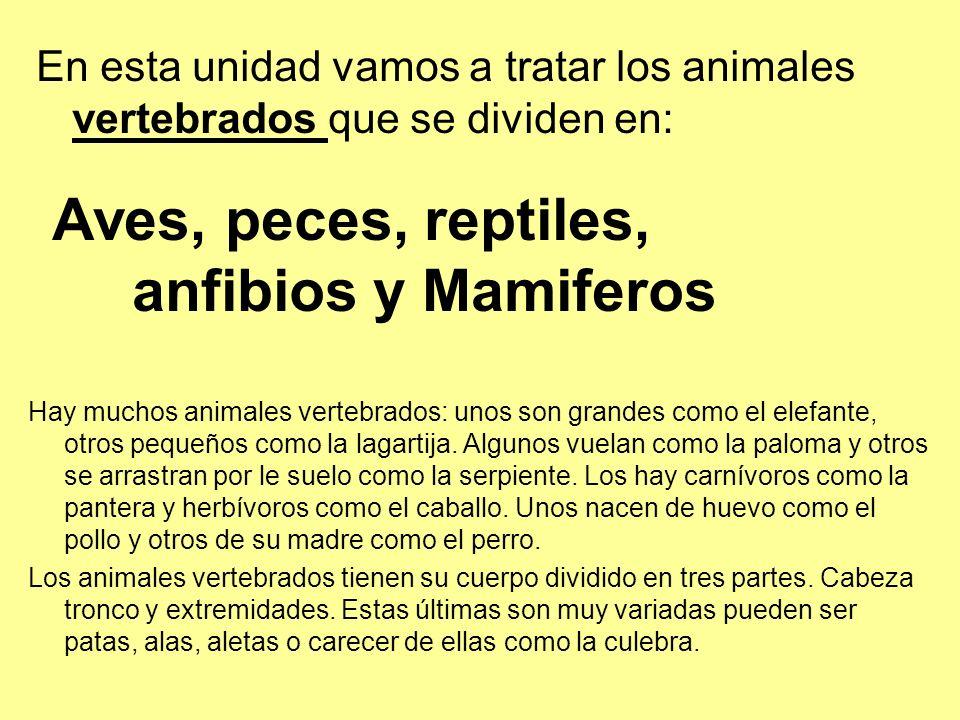En esta unidad vamos a tratar los animales vertebrados que se dividen en: Aves, peces, reptiles, anfibios y Mamiferos Hay muchos animales vertebrados: unos son grandes como el elefante, otros pequeños como la lagartija.