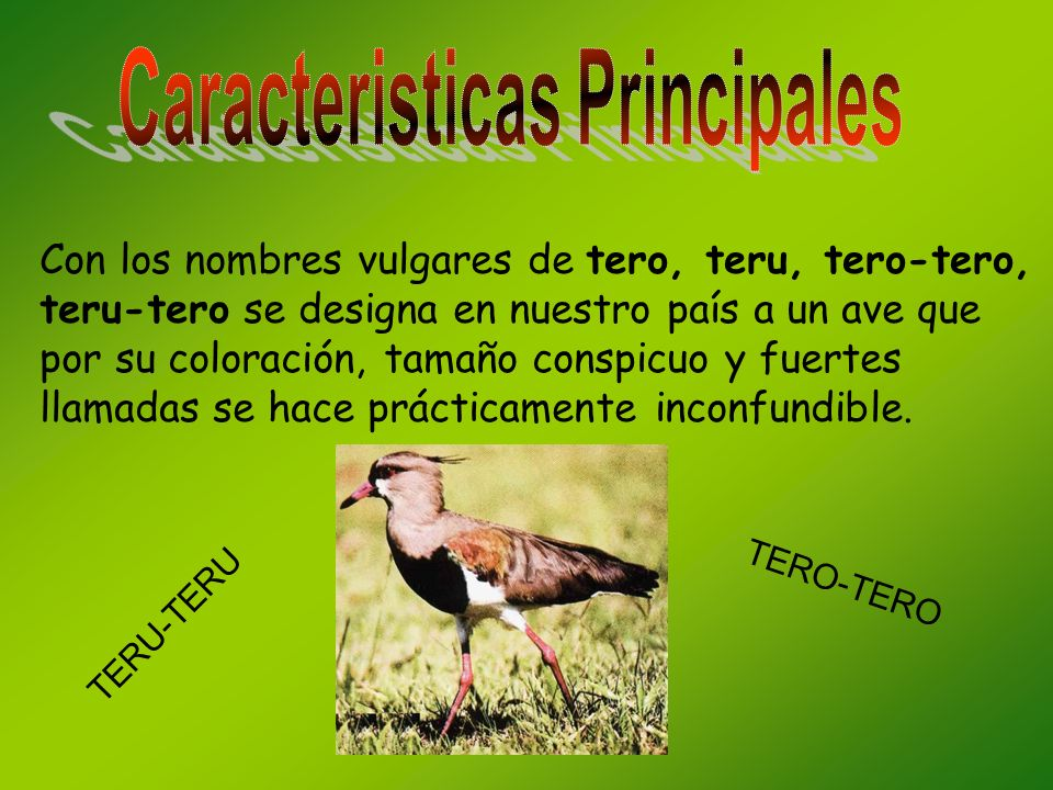 Con los nombres vulgares de tero, teru, tero-tero, teru-tero se designa en nuestro país a un ave que por su coloración, tamaño conspicuo y fuertes llamadas se hace prácticamente inconfundible.