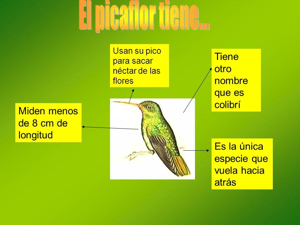 Tiene otro nombre que es colibrí Miden menos de 8 cm de longitud Usan su pico para sacar néctar de las flores Es la única especie que vuela hacia atrá