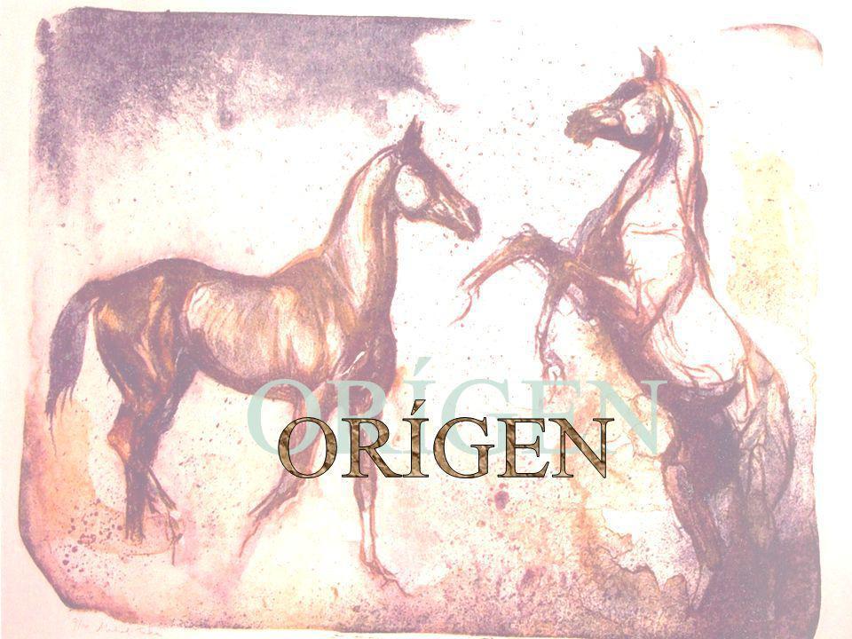 El Akhal-Teke es la única raza pura restante del caballo antiguo de Turkmene, una casta de antepasados comunes que lleva una sucesión de diversos nombres: Massaget Parthian Nisean Persa Turkmene y finalmente Akhal-Teke Las excavaciones en Turkmenistán meridional han descubierto osamentas de los caballos altos y finos que datan del 2400 A.C.