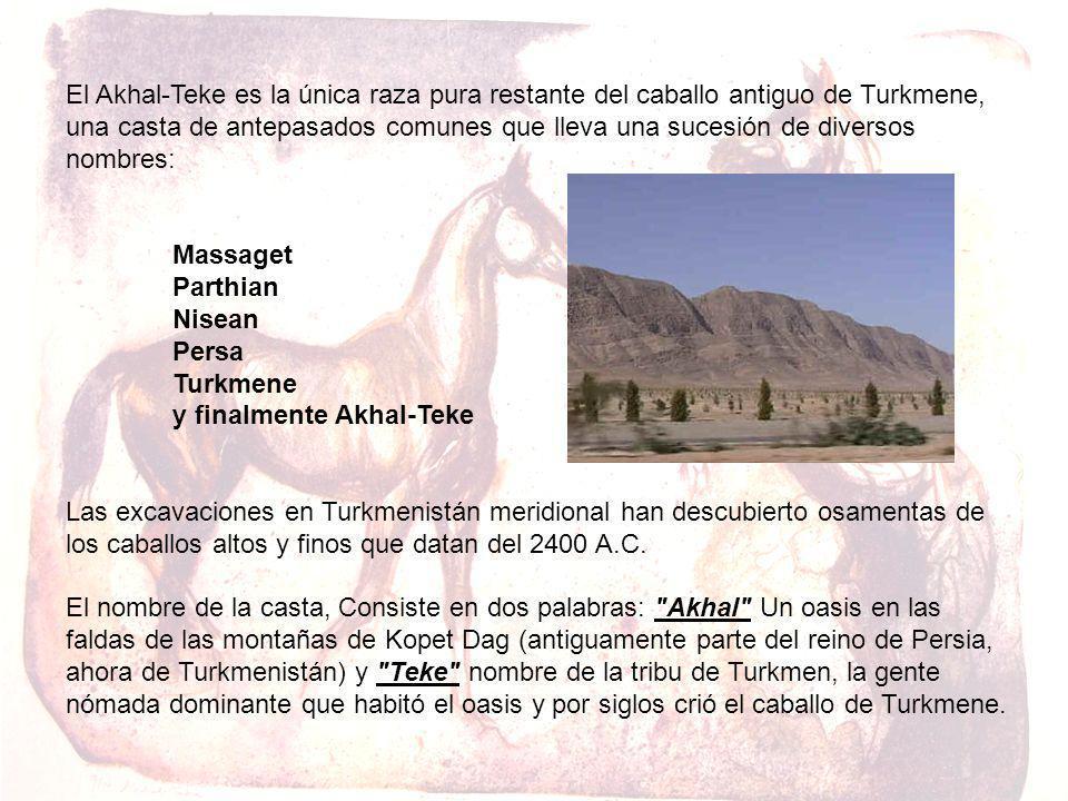 El Akhal-Teke es la única raza pura restante del caballo antiguo de Turkmene, una casta de antepasados comunes que lleva una sucesión de diversos nomb