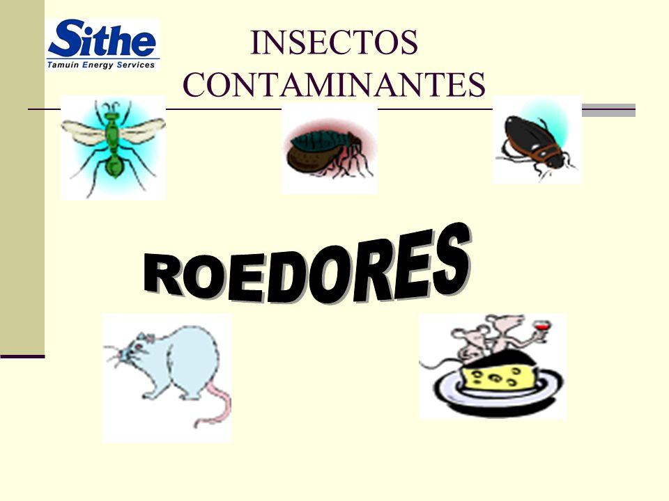 INSECTOS CONTAMINANTES