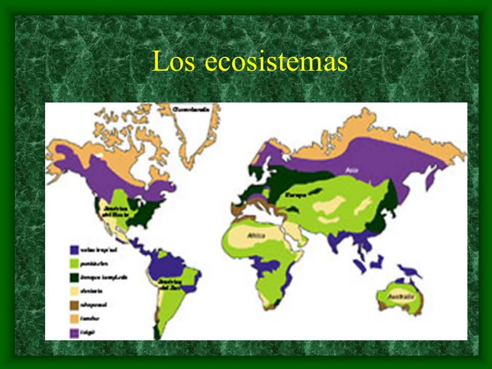 Toda la superficie terrestre, a excepción de las zonas heladas de la Antártica y Groenlandia son parte de un ecosistema.