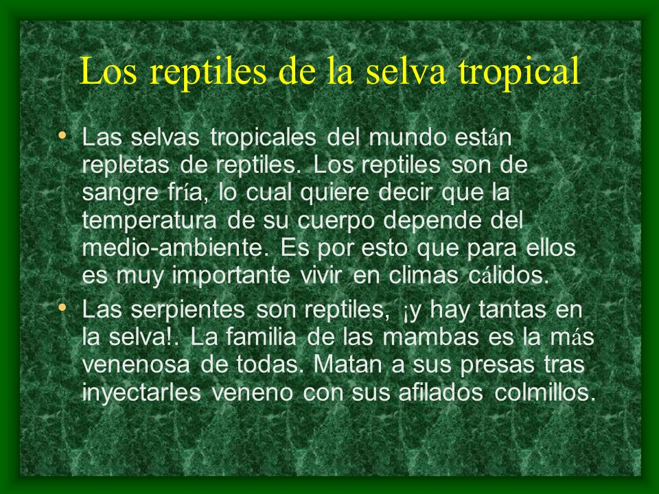 Los reptiles de la selva tropical Las selvas tropicales del mundo est á n repletas de reptiles. Los reptiles son de sangre fr í a, lo cual quiere deci