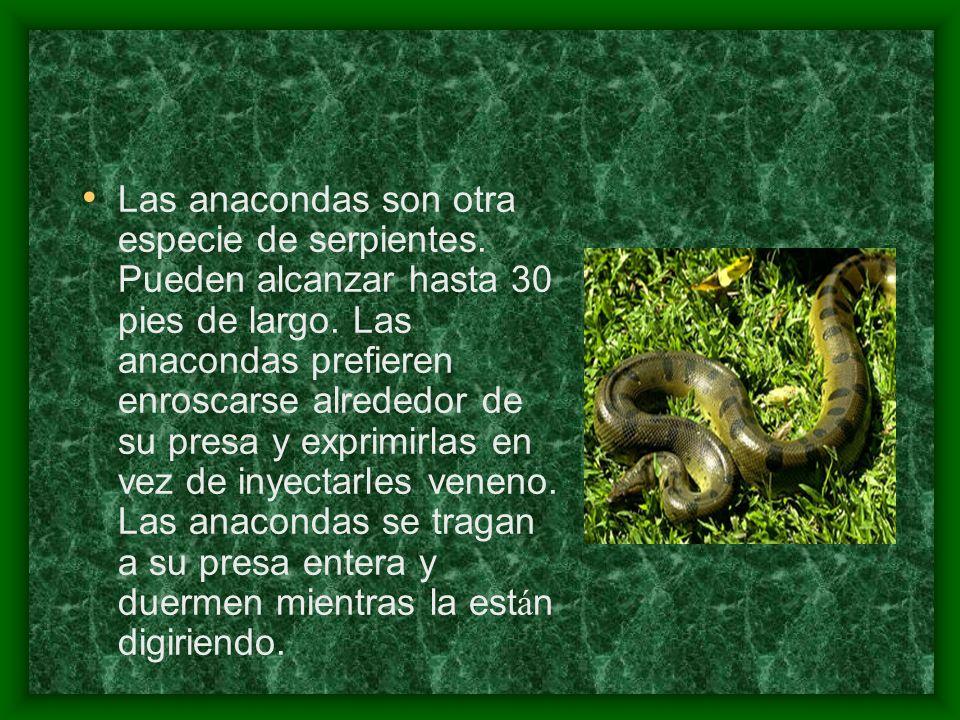 Las anacondas son otra especie de serpientes. Pueden alcanzar hasta 30 pies de largo. Las anacondas prefieren enroscarse alrededor de su presa y expri