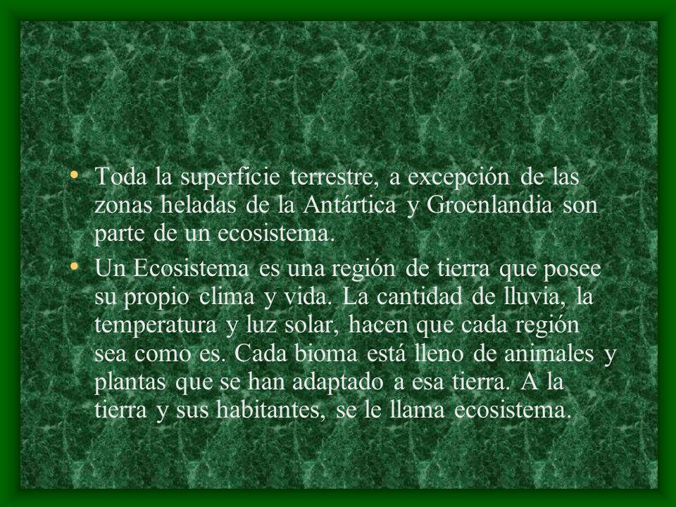 En las selvas viven cientos de especies de loros.El Aracanga Escarlata es uno de ellos.