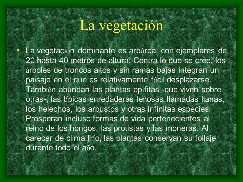 La vegetación La vegetaci ó n dominante es arb ó rea, con ejemplares de 20 hasta 40 metros de altura. Contra lo que se cree, los á rboles de troncos a