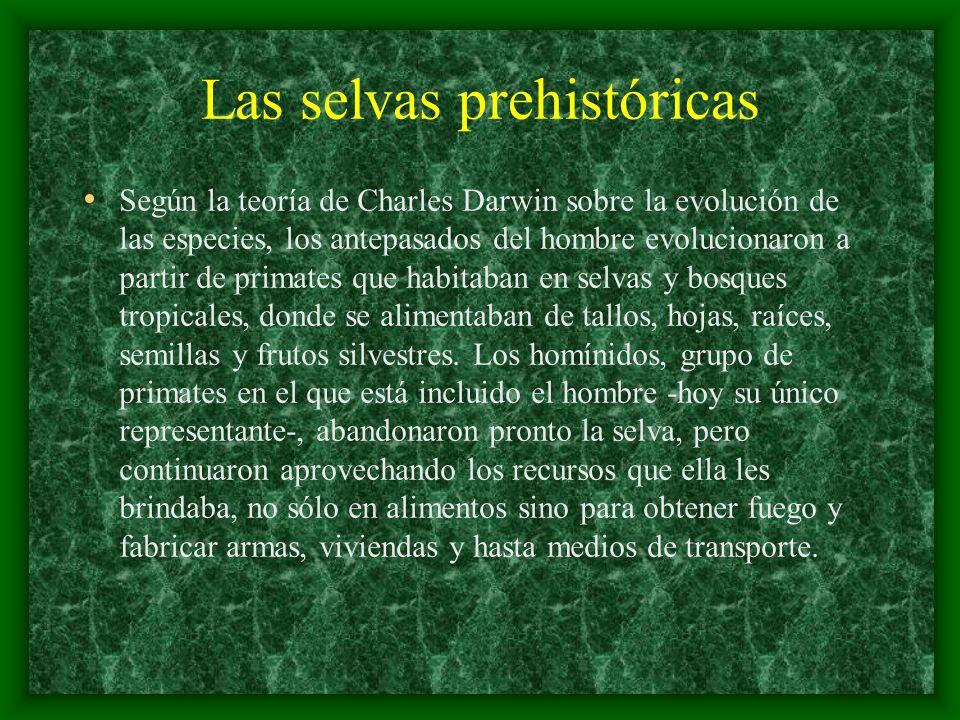 Las selvas prehistóricas Según la teoría de Charles Darwin sobre la evolución de las especies, los antepasados del hombre evolucionaron a partir de pr