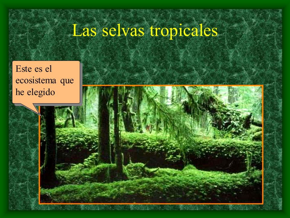 Las selvas tropicales Este es el ecosistema que he elegido