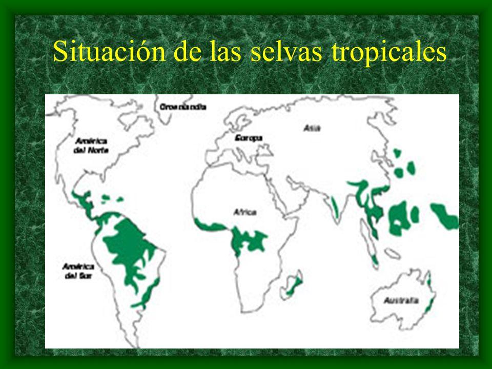 ¿Cómo son las selvas tropicales.