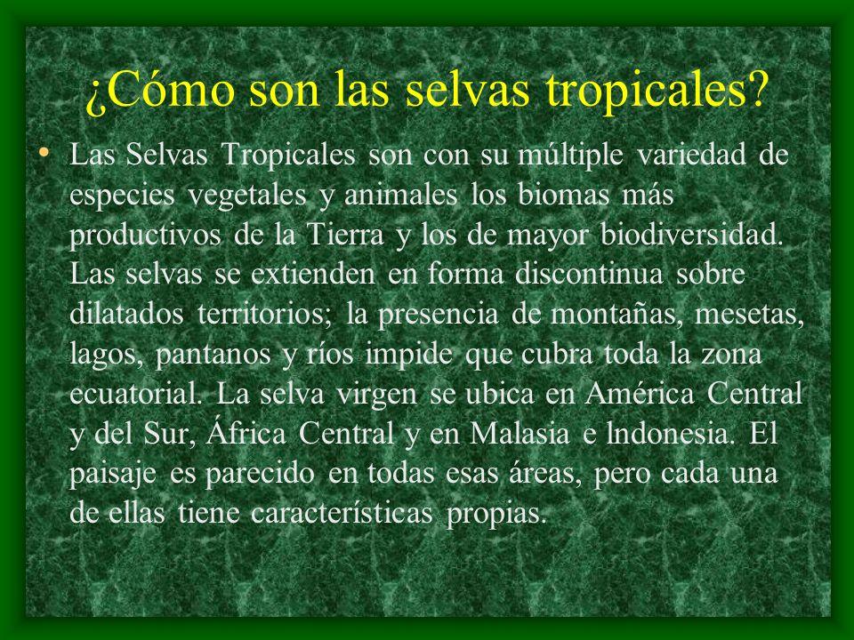 ¿Cómo son las selvas tropicales? Las Selvas Tropicales son con su múltiple variedad de especies vegetales y animales los biomas más productivos de la