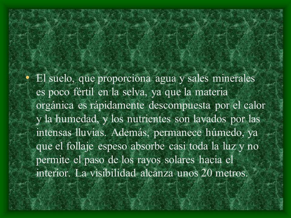 Insectos de la Selva Tropical La ara ñ a m á s temida y mejor conocida del mundo vive en la selva.