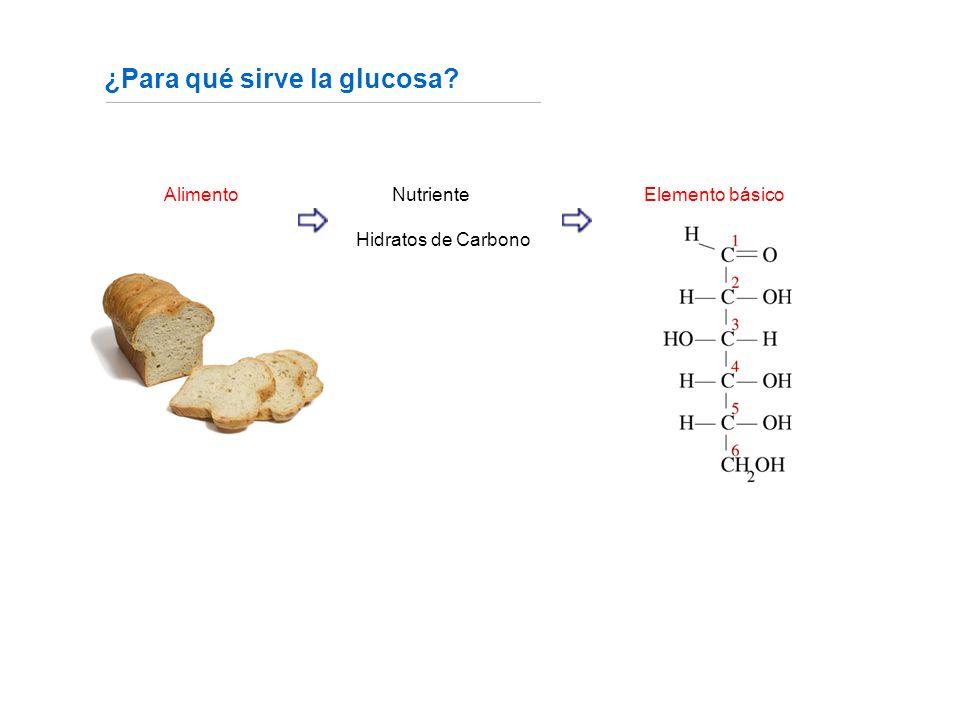 Alimento NutrienteElemento básico Hidratos de Carbono ¿Para qué sirve la glucosa.