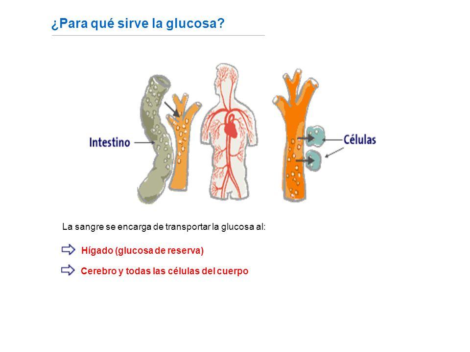 ¿Para qué sirve la glucosa.