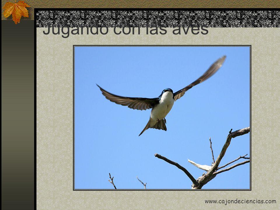 Jugando con las aves www.cajondeciencias.com