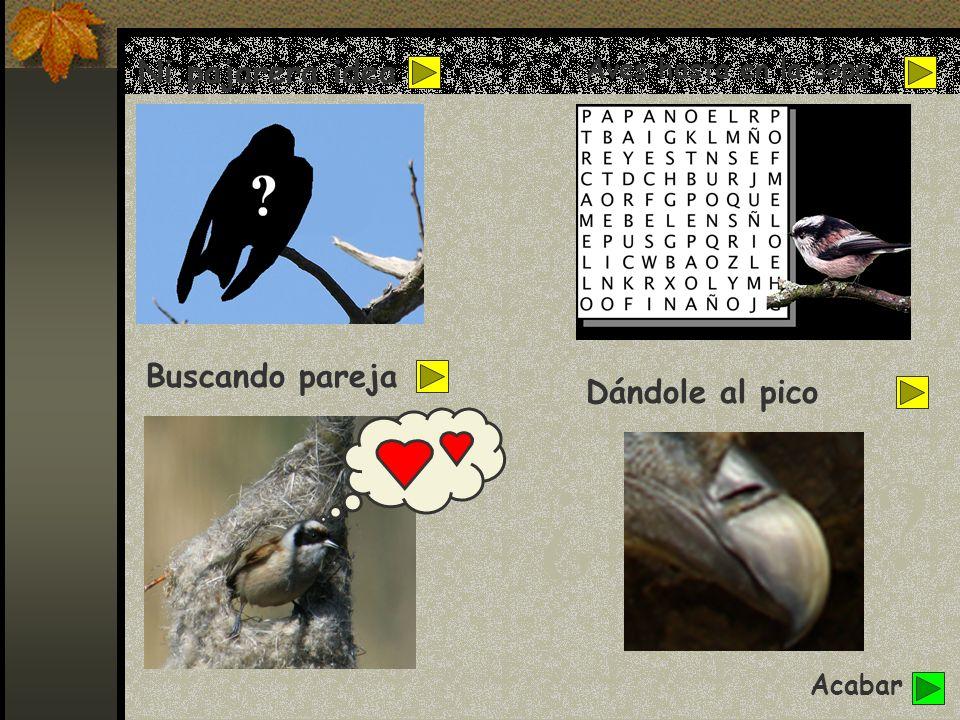 Vamos a hacer unos juegos que te servirán para aprender más del fascinante mundo de las aves y para probar cuánto sabes de nuestras amigas.