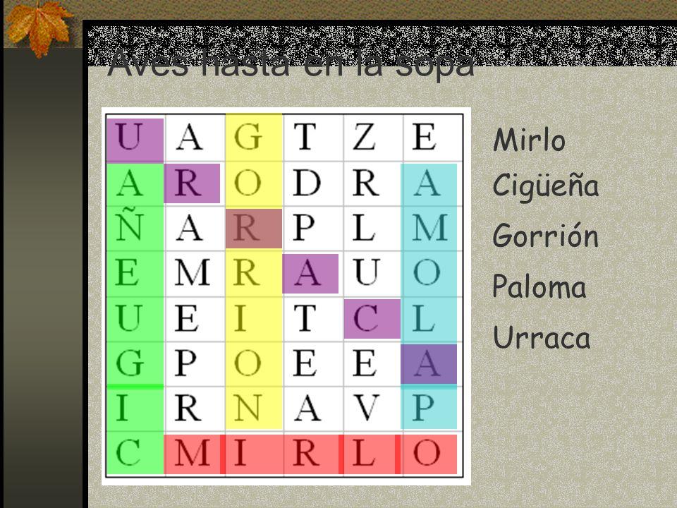 Mirlo Cigüeña Gorrión Paloma Urraca Aves hasta en la sopa