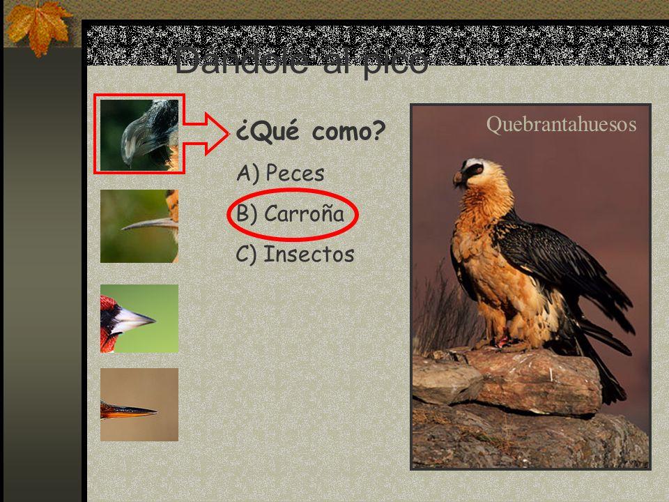 Mi nombre es Pico picapinos, y soy un pájaro carpintero.