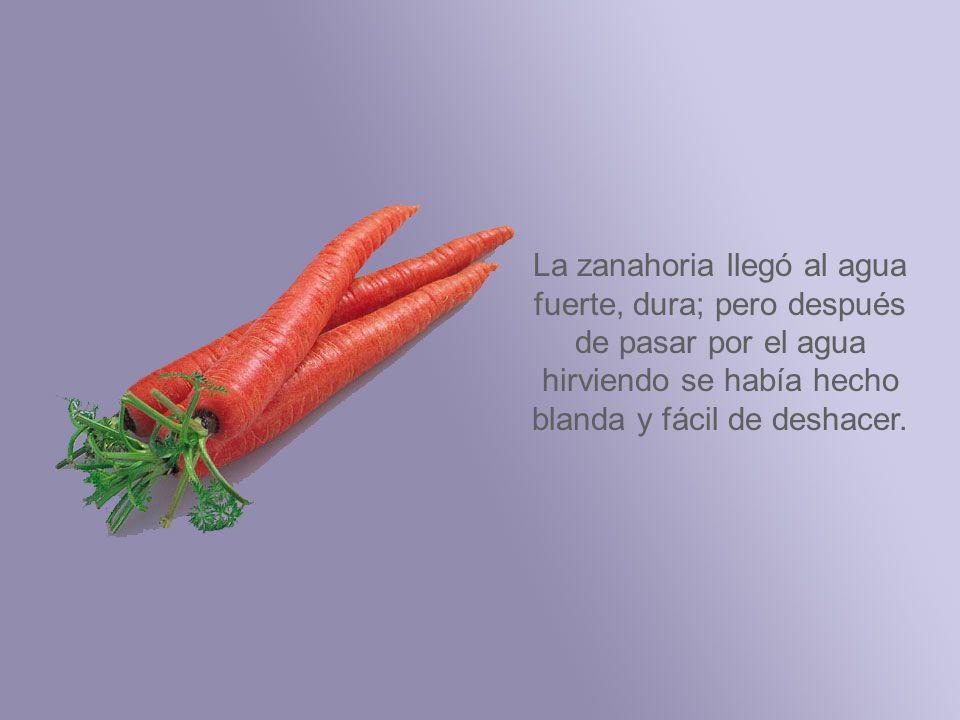 La zanahoria llegó al agua fuerte, dura; pero después de pasar por el agua hirviendo se había hecho blanda y fácil de deshacer.