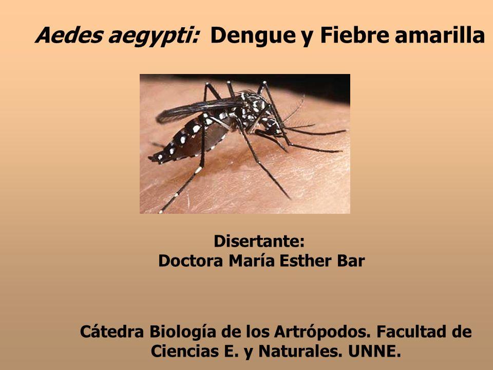 Aedes aegypti: Dengue y Fiebre amarilla Disertante: Doctora María Esther Bar Cátedra Biología de los Artrópodos. Facultad de Ciencias E. y Naturales.