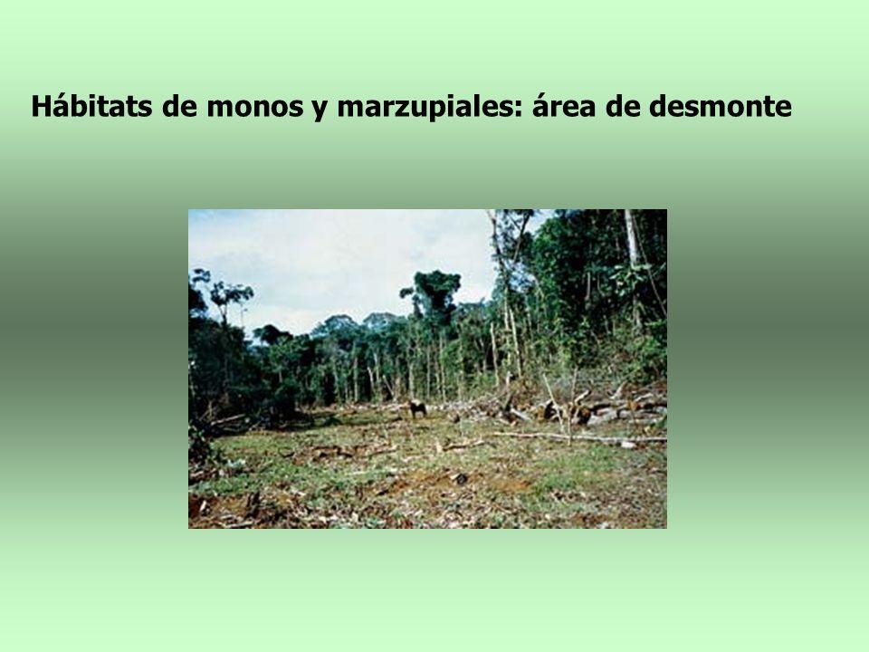 Hábitats de monos y marzupiales: área de desmonte