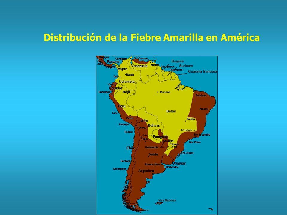 Distribución de la Fiebre Amarilla en América
