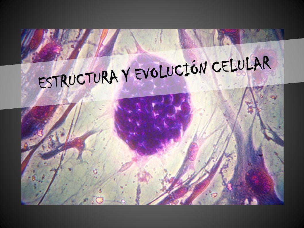 Célula Una célula (del latín cellula, diminutivo de cellam, celda, cuarto pequeño) es la unidad morfológica y funcional de todo ser vivo.