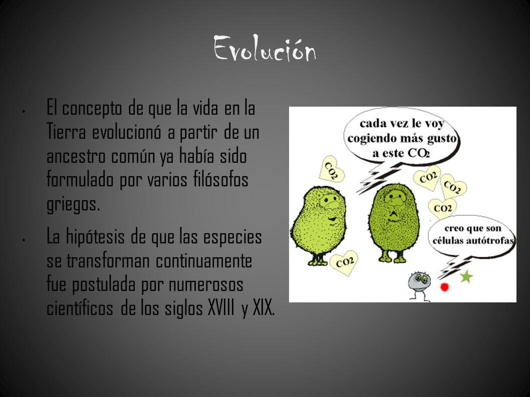 Evolución El concepto de que la vida en la Tierra evolucionó a partir de un ancestro común ya había sido formulado por varios filósofos griegos. La hi