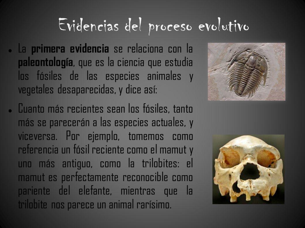 Evidencias del proceso evolutivo La primera evidencia se relaciona con la paleontología, que es la ciencia que estudia los fósiles de las especies ani