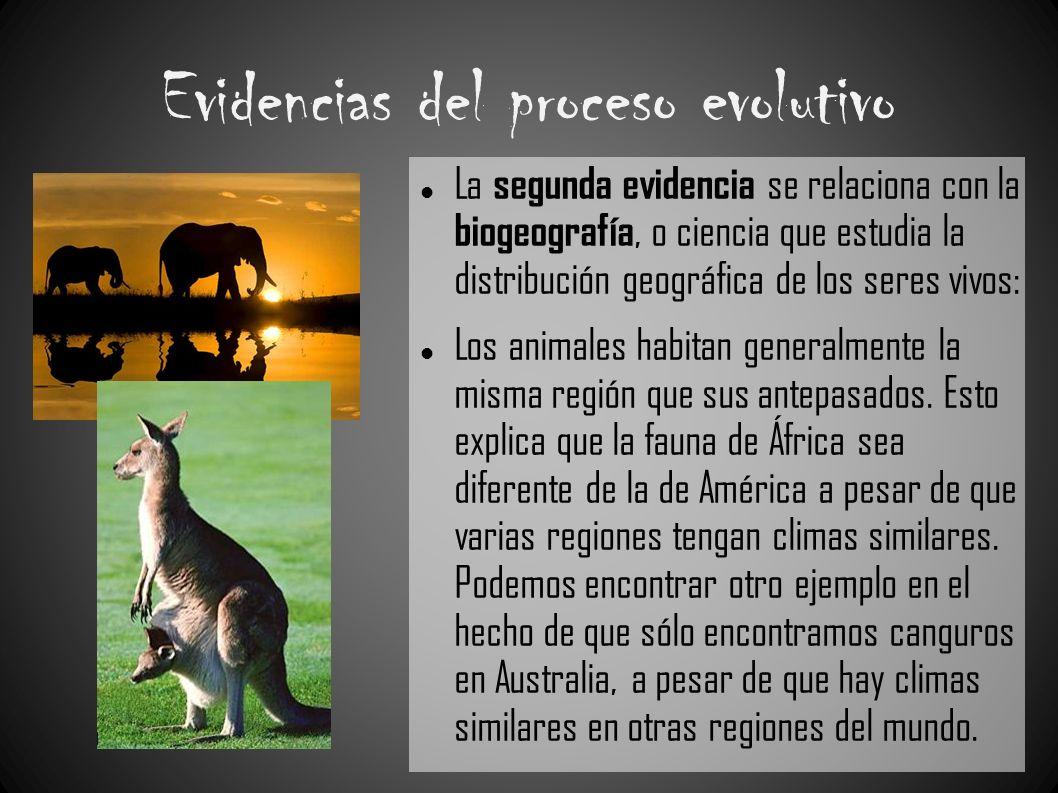 Evidencias del proceso evolutivo La segunda evidencia se relaciona con la biogeografía, o ciencia que estudia la distribución geográfica de los seres