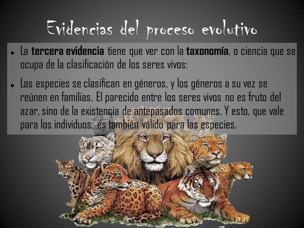 Evidencias del proceso evolutivo La tercera evidencia tiene que ver con la taxonomía, o ciencia que se ocupa de la clasificación de los seres vivos: L