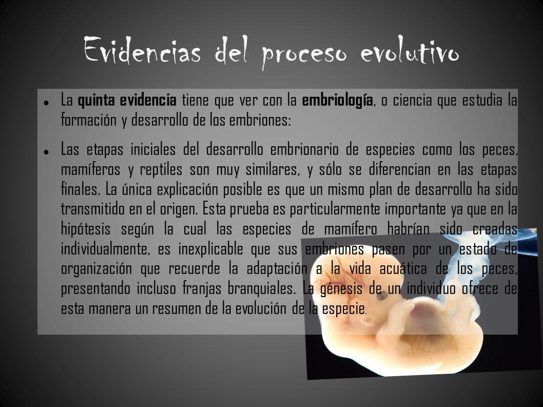 Evidencias del proceso evolutivo La quinta evidencia tiene que ver con la embriología, o ciencia que estudia la formación y desarrollo de los embrione