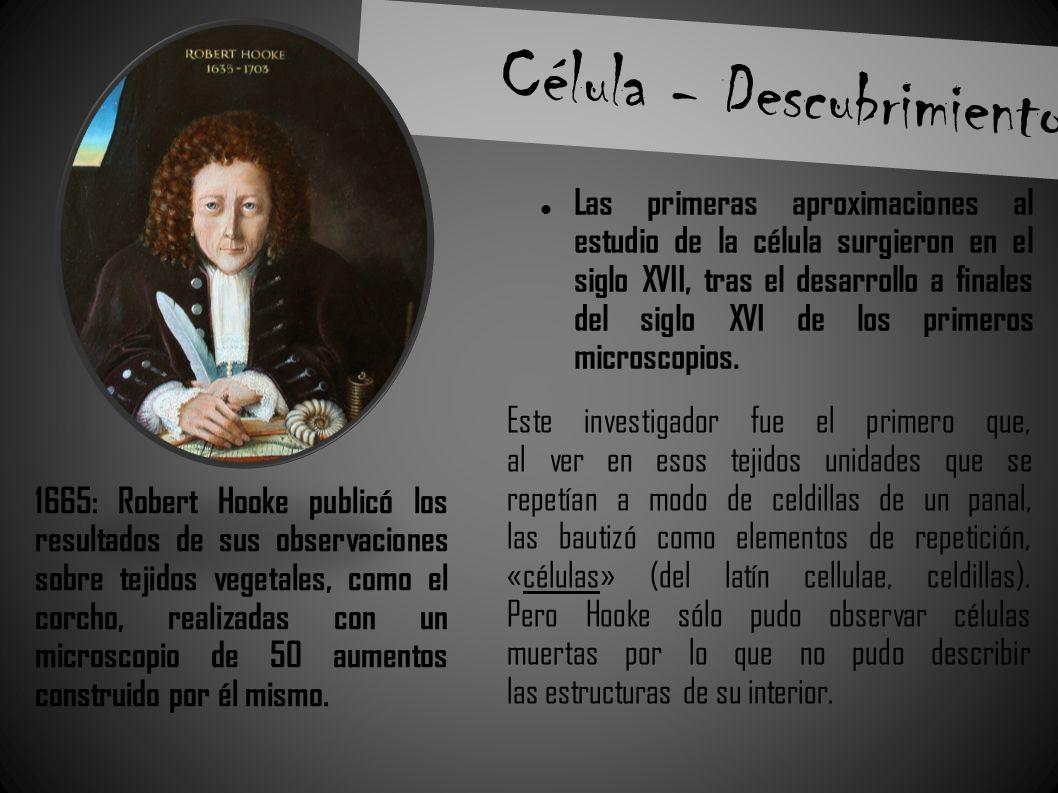Célula - Descubrimiento Las primeras aproximaciones al estudio de la célula surgieron en el siglo XVII, tras el desarrollo a finales del siglo XVI de