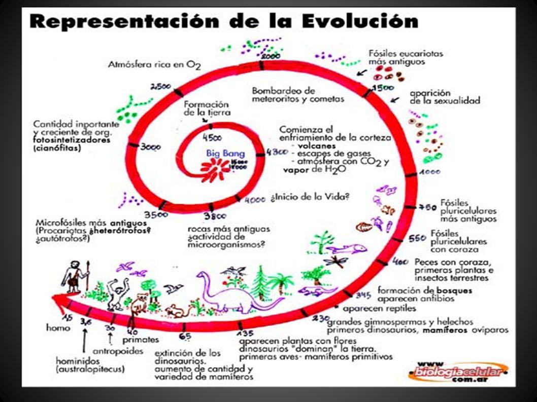 Evolución de la vida