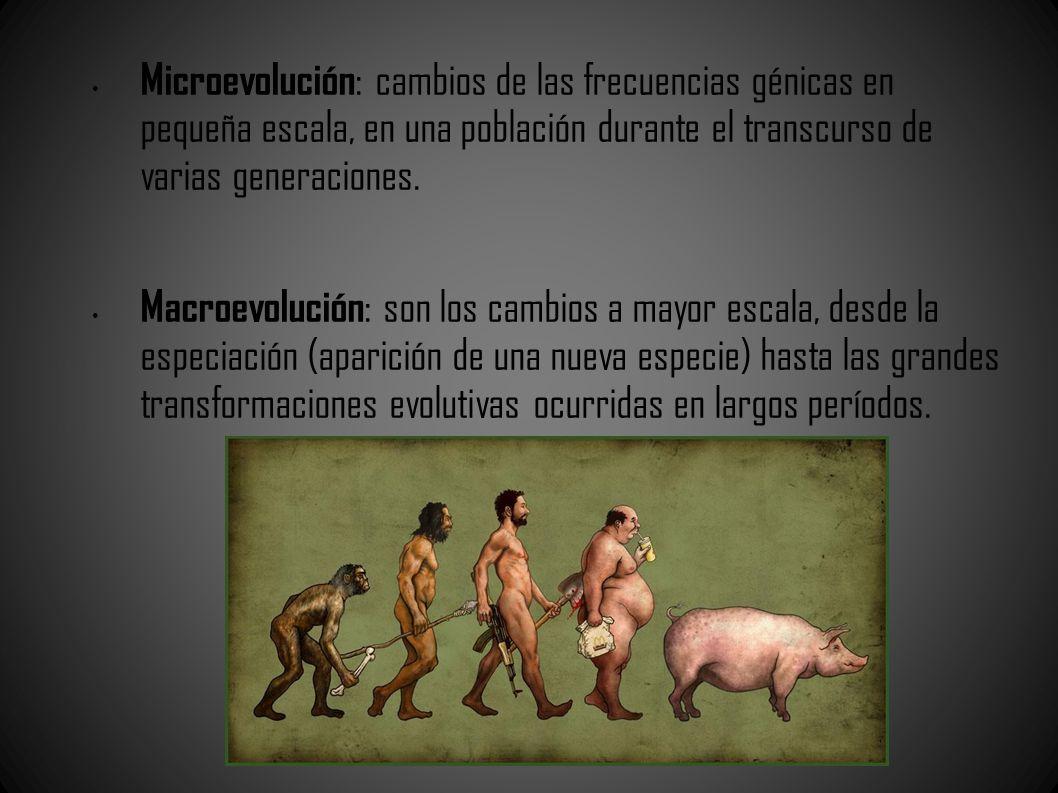 Microevolución : cambios de las frecuencias génicas en pequeña escala, en una población durante el transcurso de varias generaciones. Macroevolución :